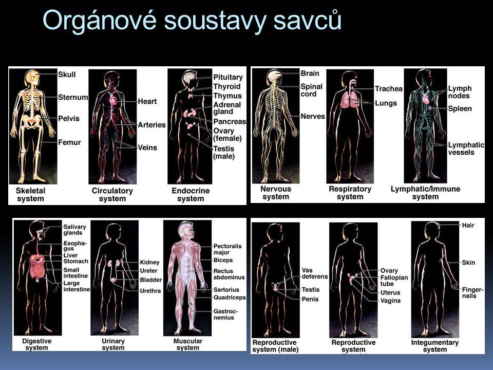 Orgánové soustavy savců