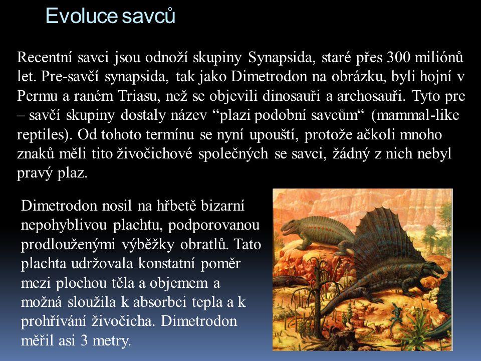 Evoluce savců