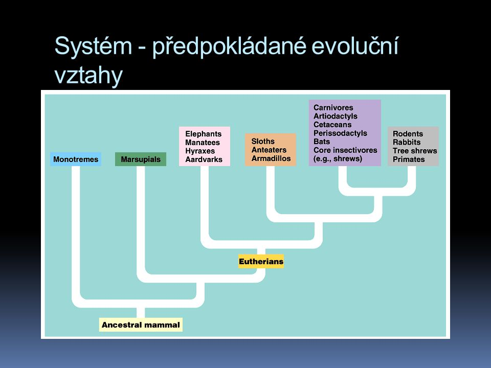 Systém - předpokládané evoluční vztahy