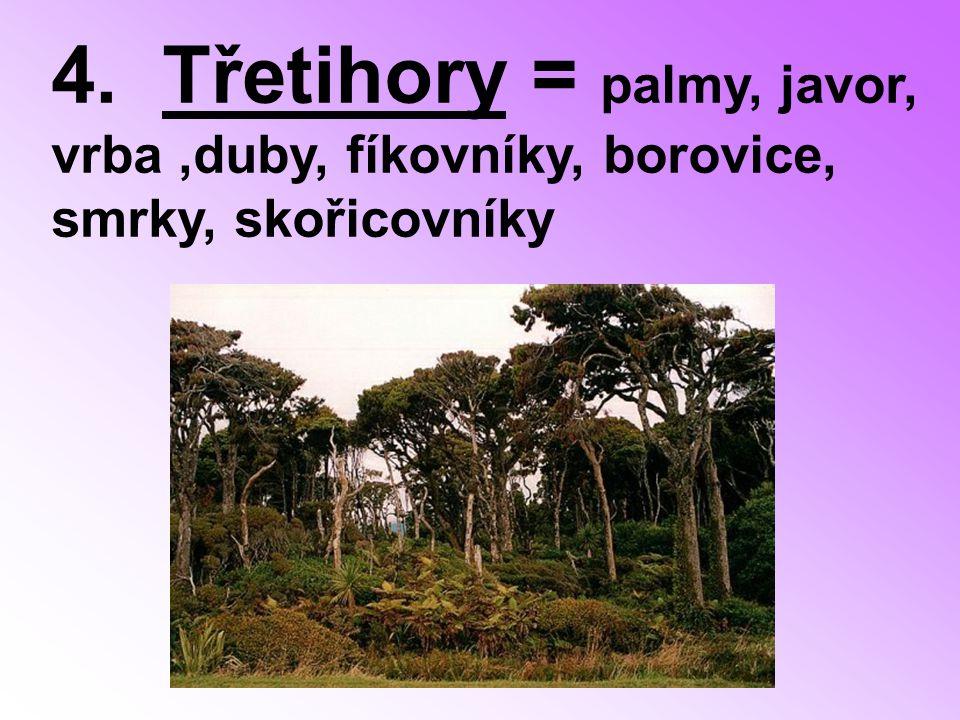 4. Třetihory = palmy, javor, vrba ,duby, fíkovníky, borovice, smrky, skořicovníky