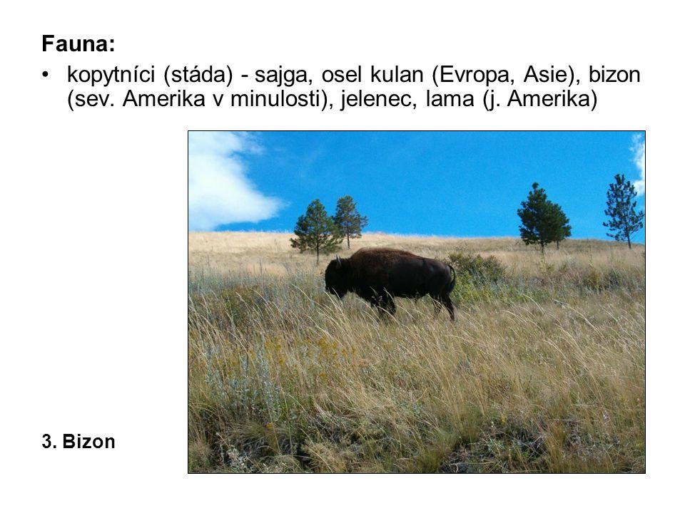 Fauna: kopytníci (stáda) - sajga, osel kulan (Evropa, Asie), bizon (sev. Amerika v minulosti), jelenec, lama (j. Amerika)