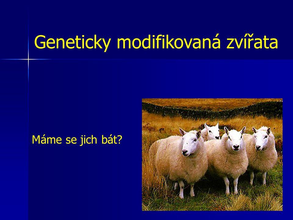 Geneticky modifikovaná zvířata