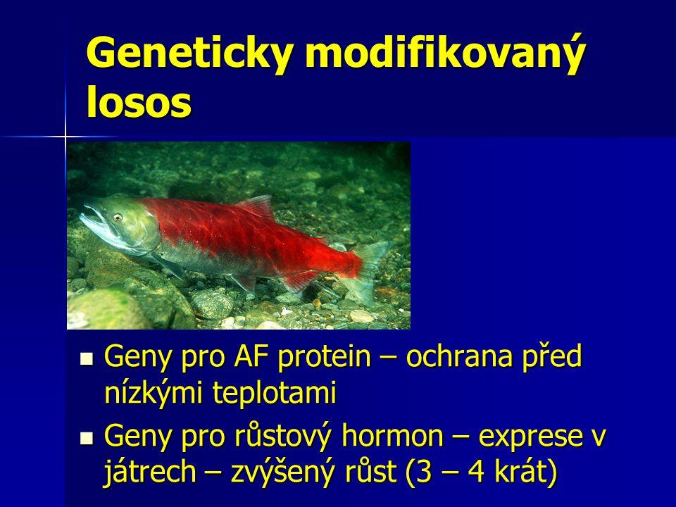 Geneticky modifikovaný losos
