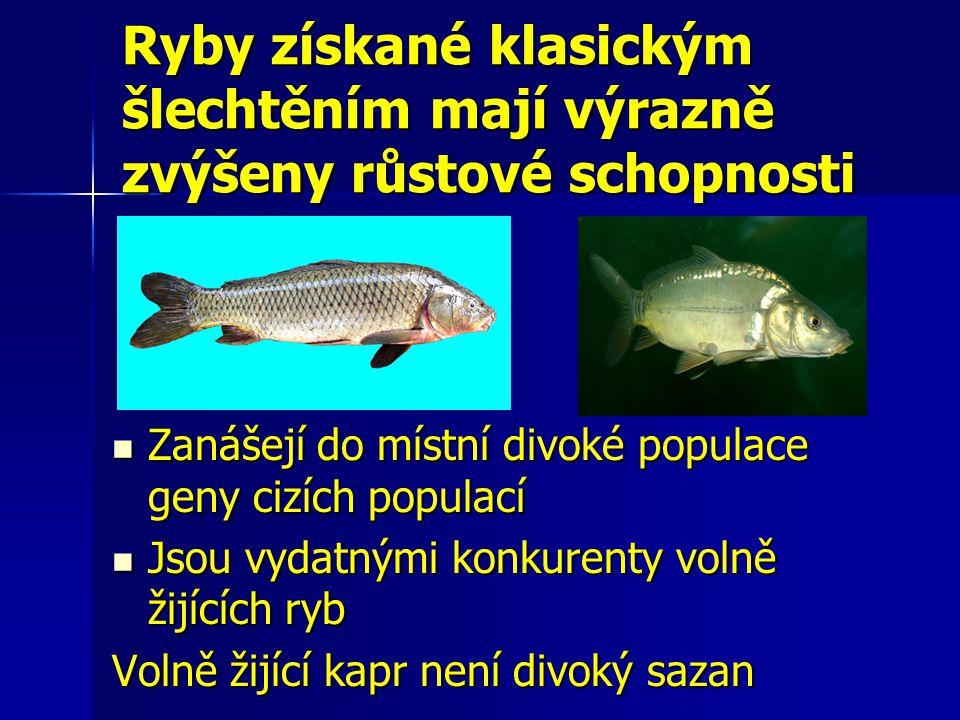 Ryby získané klasickým šlechtěním mají výrazně zvýšeny růstové schopnosti