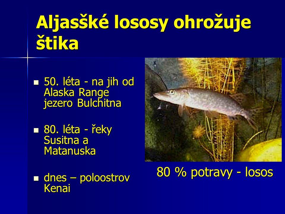 Aljasšké lososy ohrožuje štika