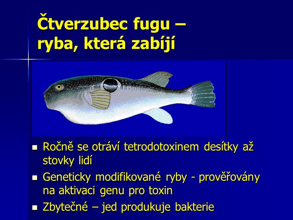 Čtverzubec fugu – ryba, která zabíjí