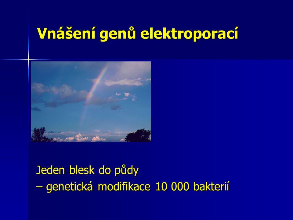 Vnášení genů elektroporací