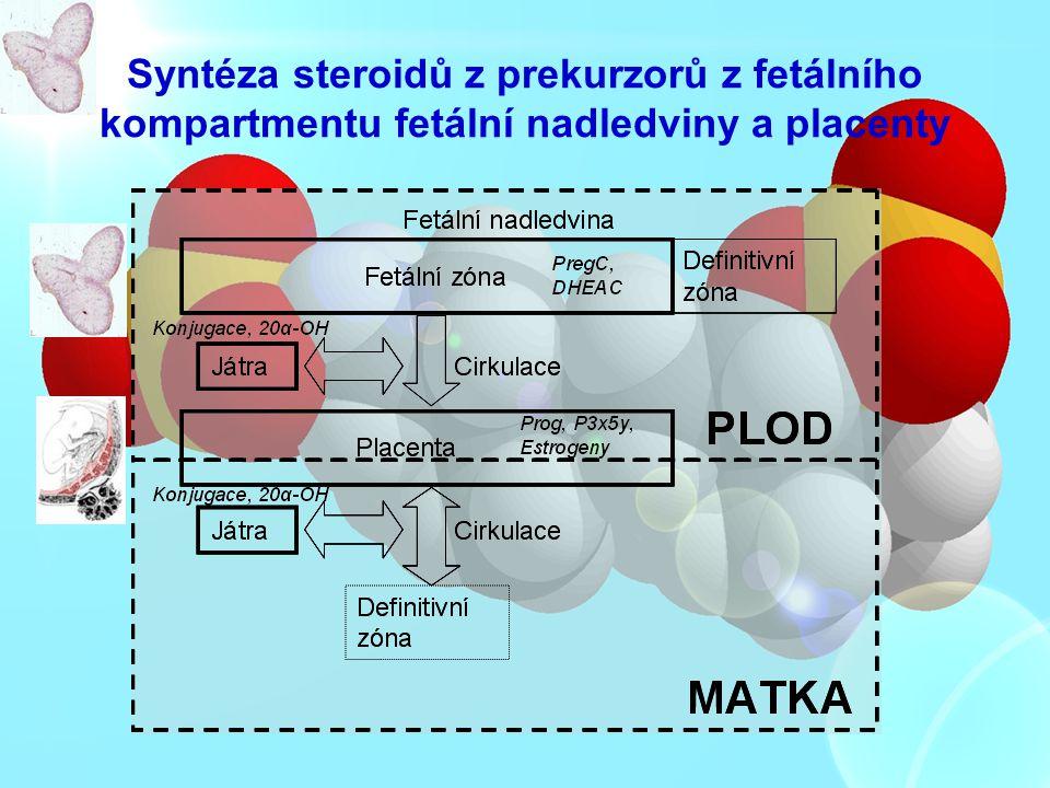 Syntéza steroidů z prekurzorů z fetálního kompartmentu fetální nadledviny a placenty