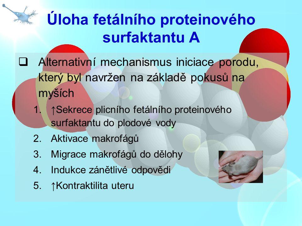 Úloha fetálního proteinového surfaktantu A