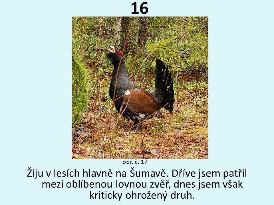 16 obr. č. 17. Žiju v lesích hlavně na Šumavě.