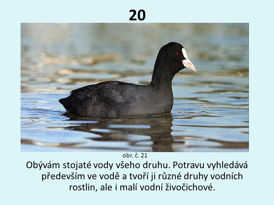 20 obr. č. 21.
