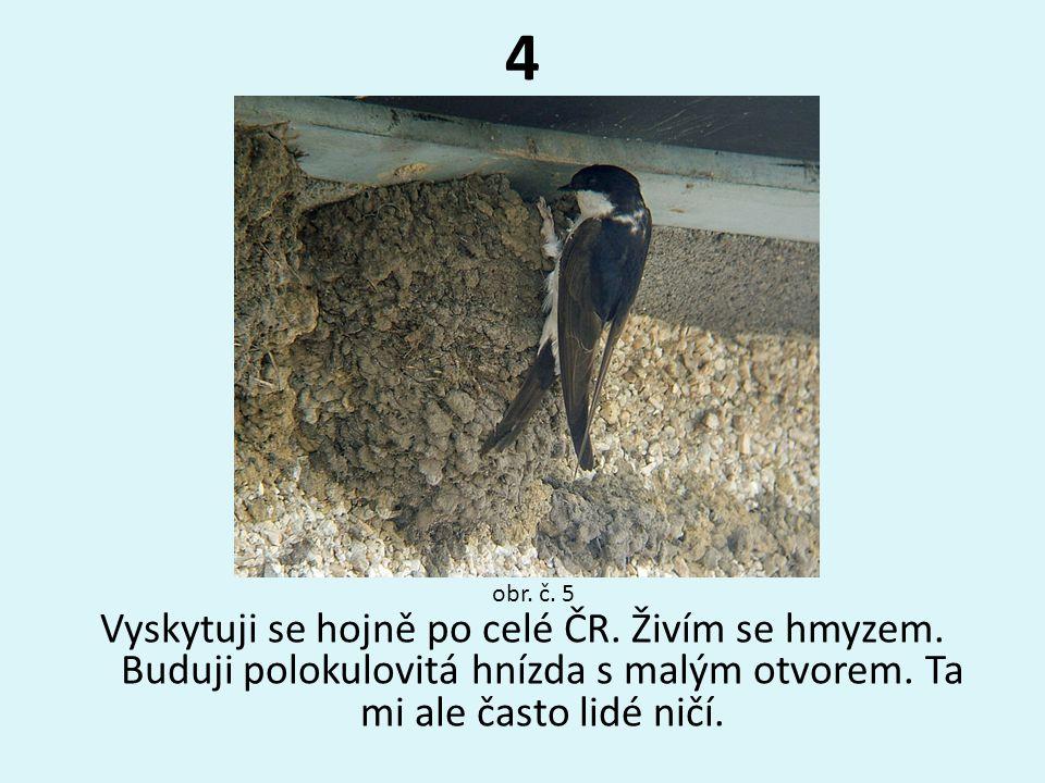 4 obr. č. 5. Vyskytuji se hojně po celé ČR. Živím se hmyzem.
