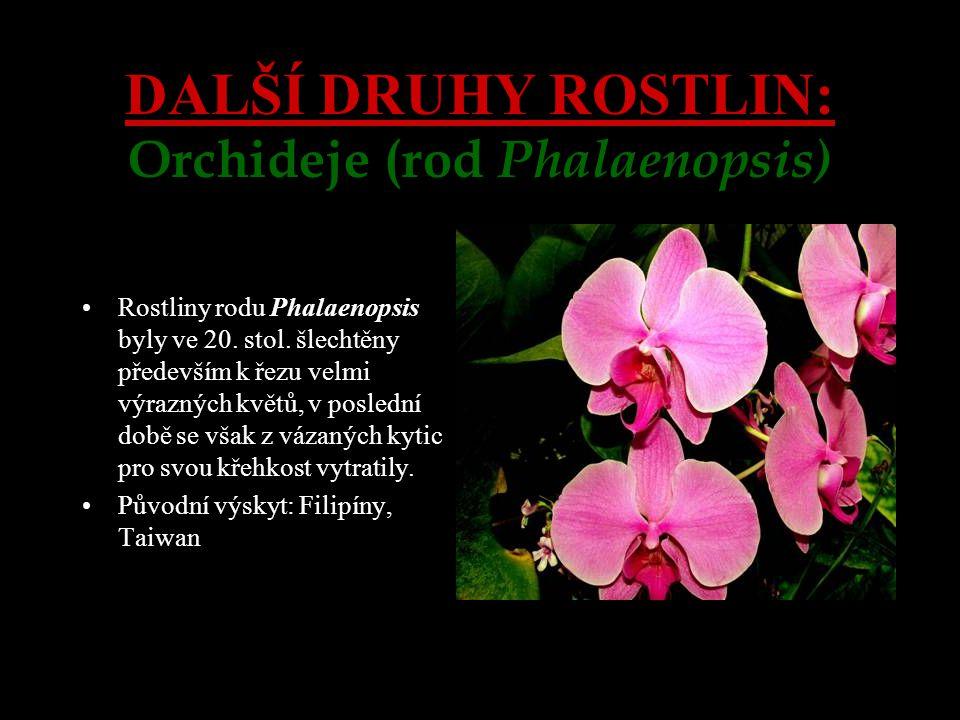 DALŠÍ DRUHY ROSTLIN: Orchideje (rod Phalaenopsis)
