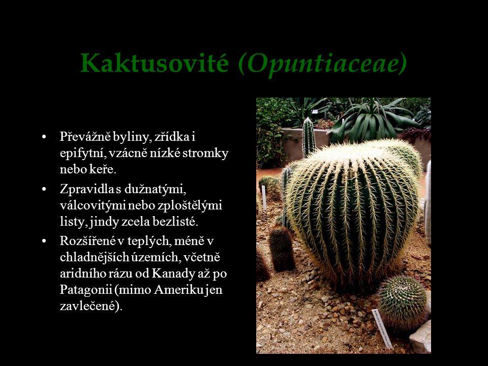 Kaktusovité (Opuntiaceae)