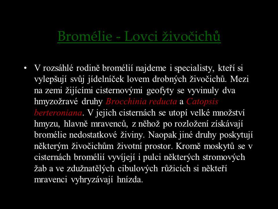 Bromélie - Lovci živočichů