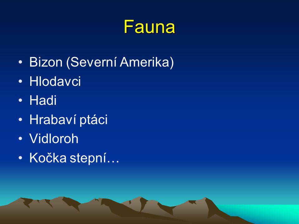 Fauna Bizon (Severní Amerika) Hlodavci Hadi Hrabaví ptáci Vidloroh