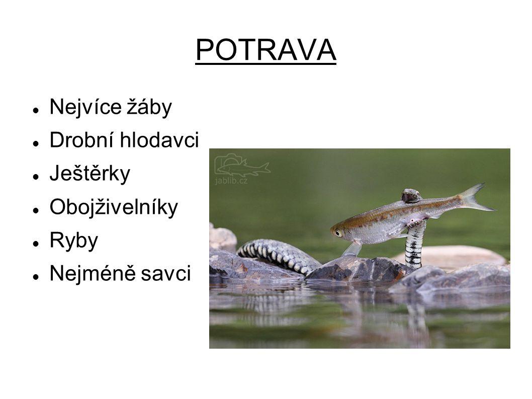 POTRAVA Nejvíce žáby Drobní hlodavci Ještěrky Obojživelníky Ryby