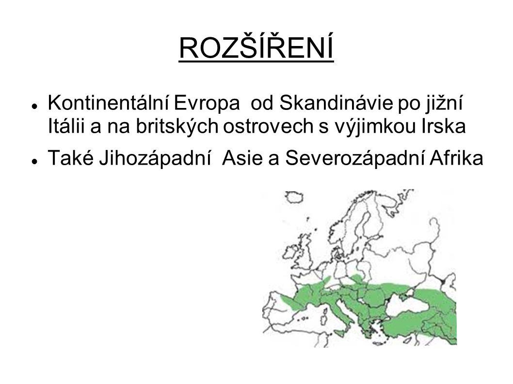 ROZŠÍŘENÍ Kontinentální Evropa od Skandinávie po jižní Itálii a na britských ostrovech s výjimkou Irska.