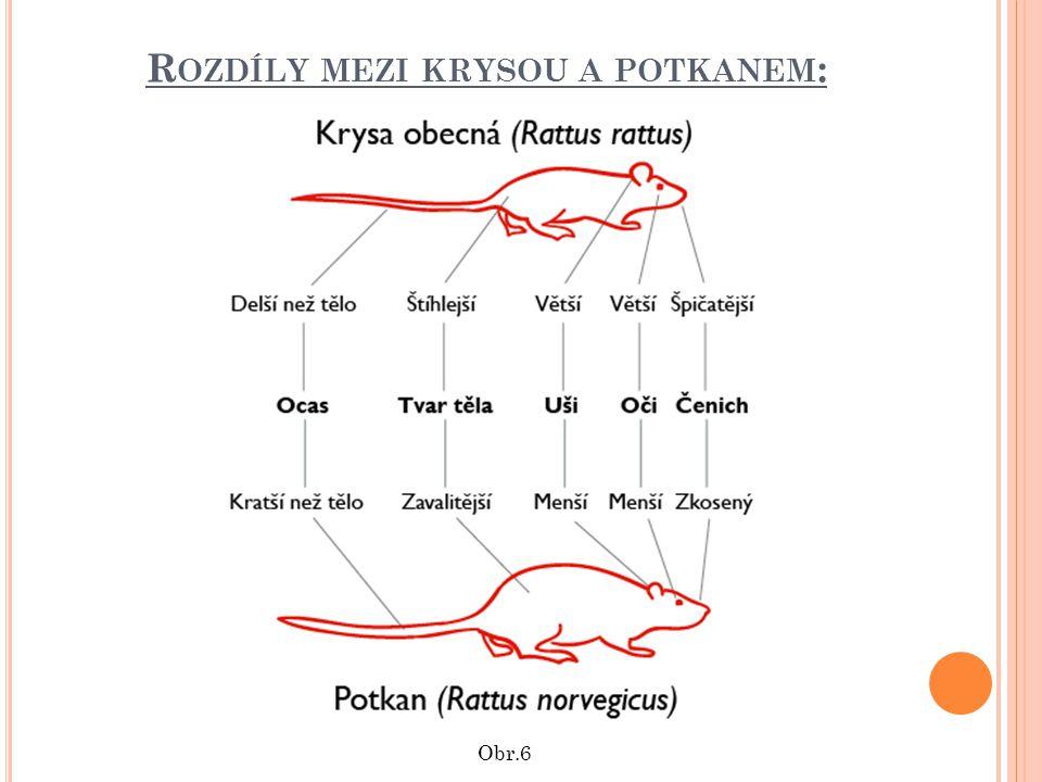Rozdíly mezi krysou a potkanem: