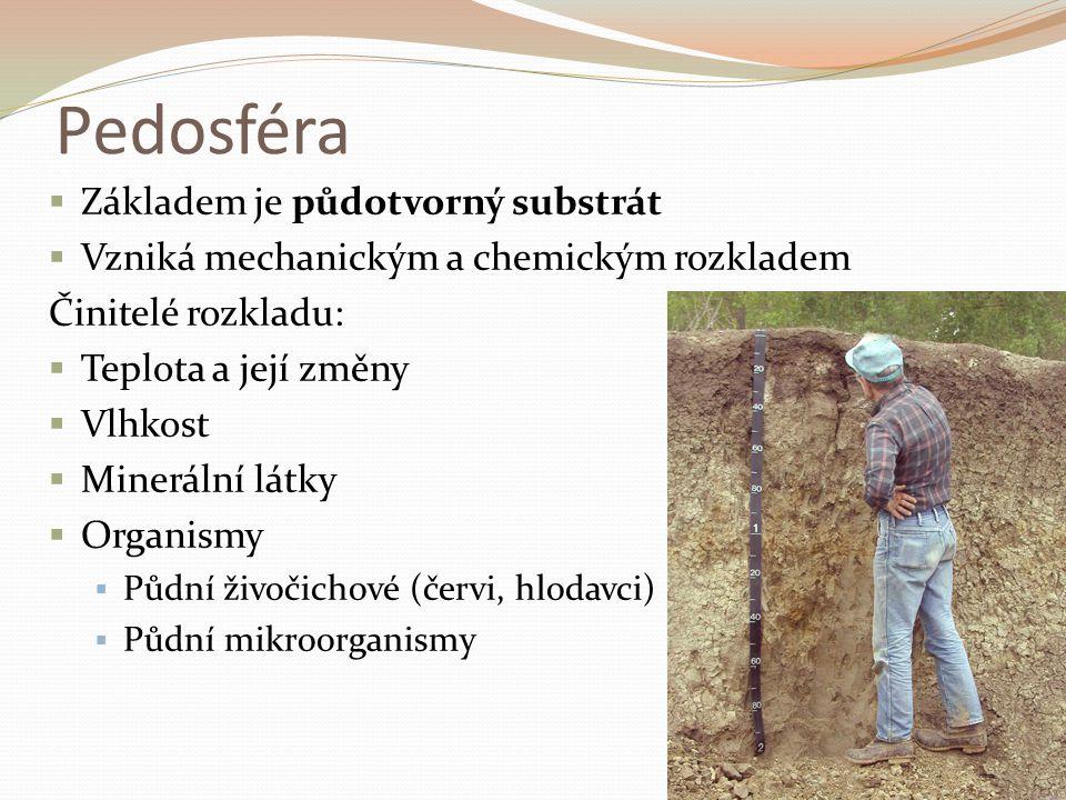 Pedosféra Základem je půdotvorný substrát