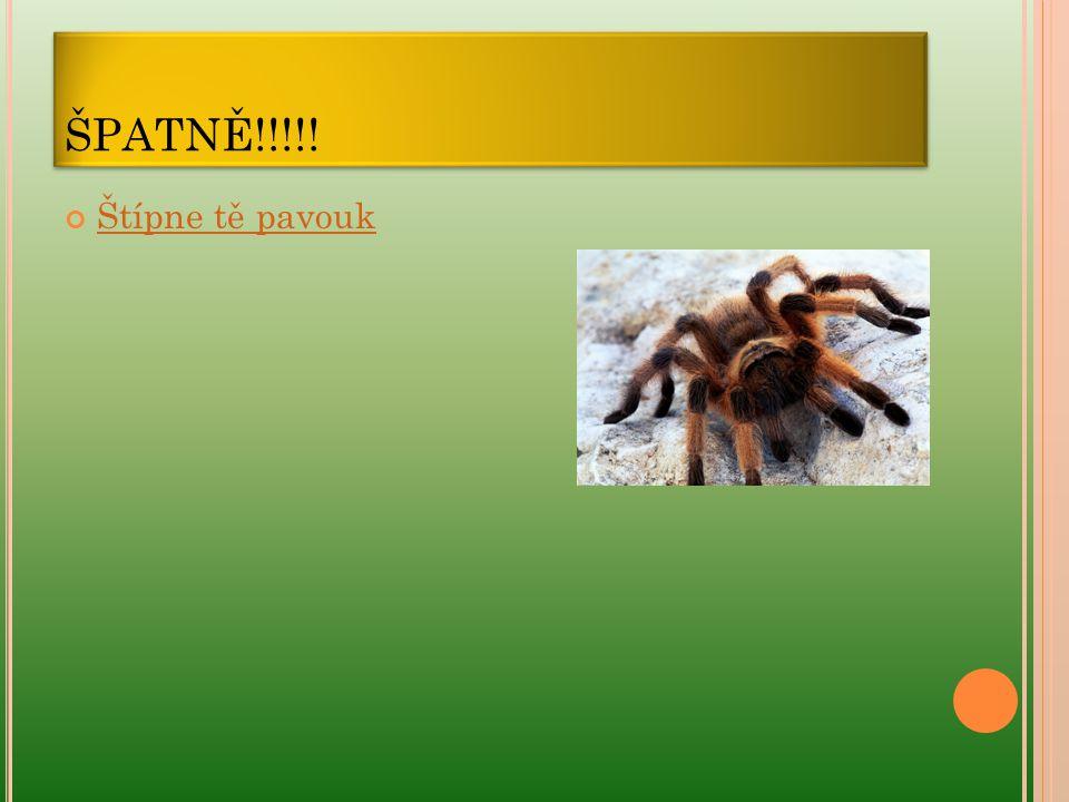 ŠPATNĚ!!!!! Štípne tě pavouk