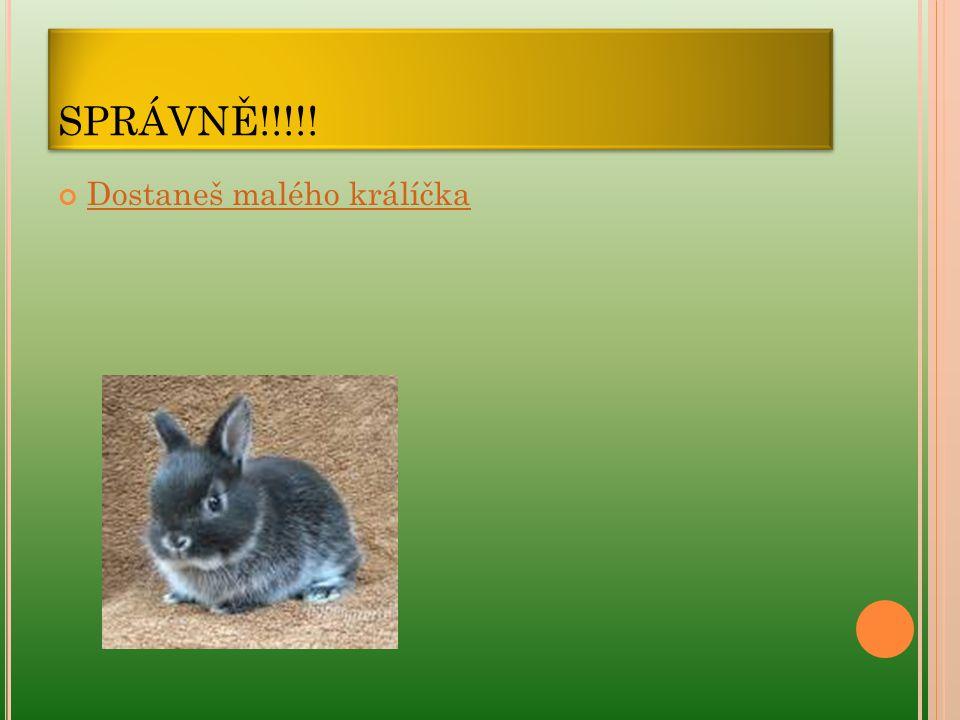 SPRÁVNĚ!!!!! Dostaneš malého králíčka