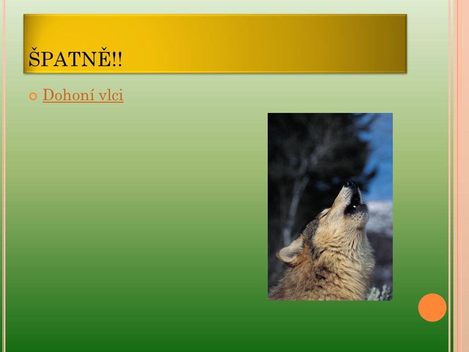 ŠPATNĚ!! Dohoní vlci