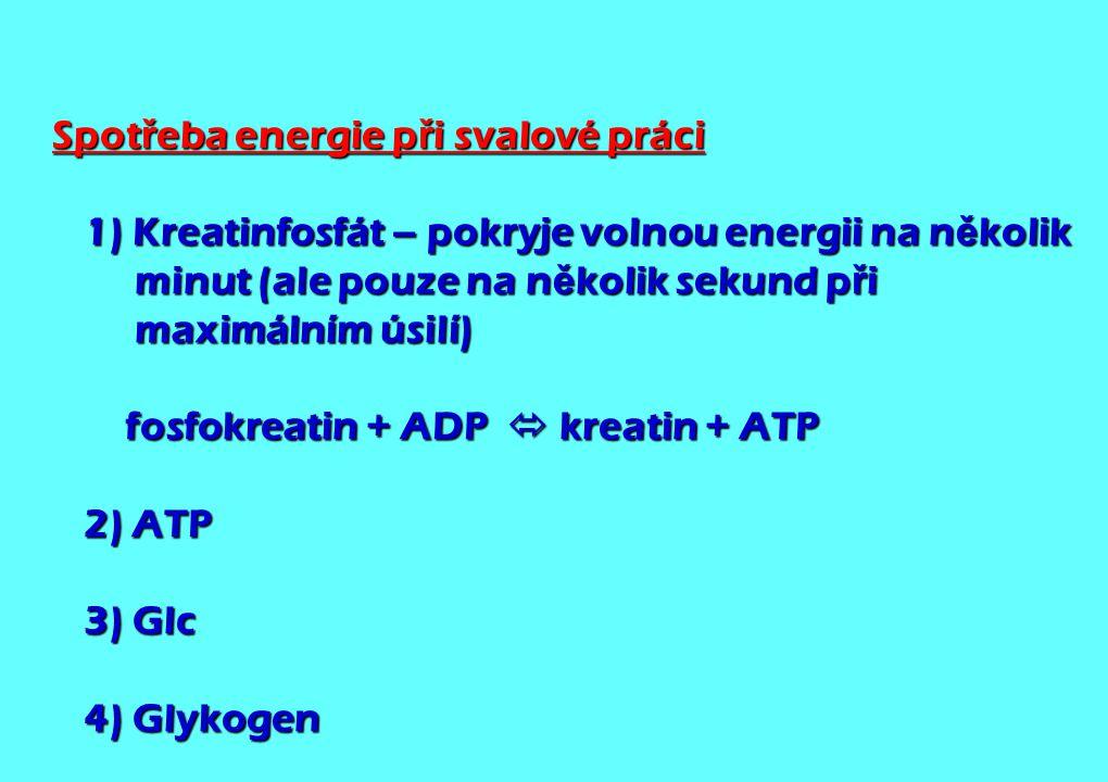 Spotřeba energie při svalové práci