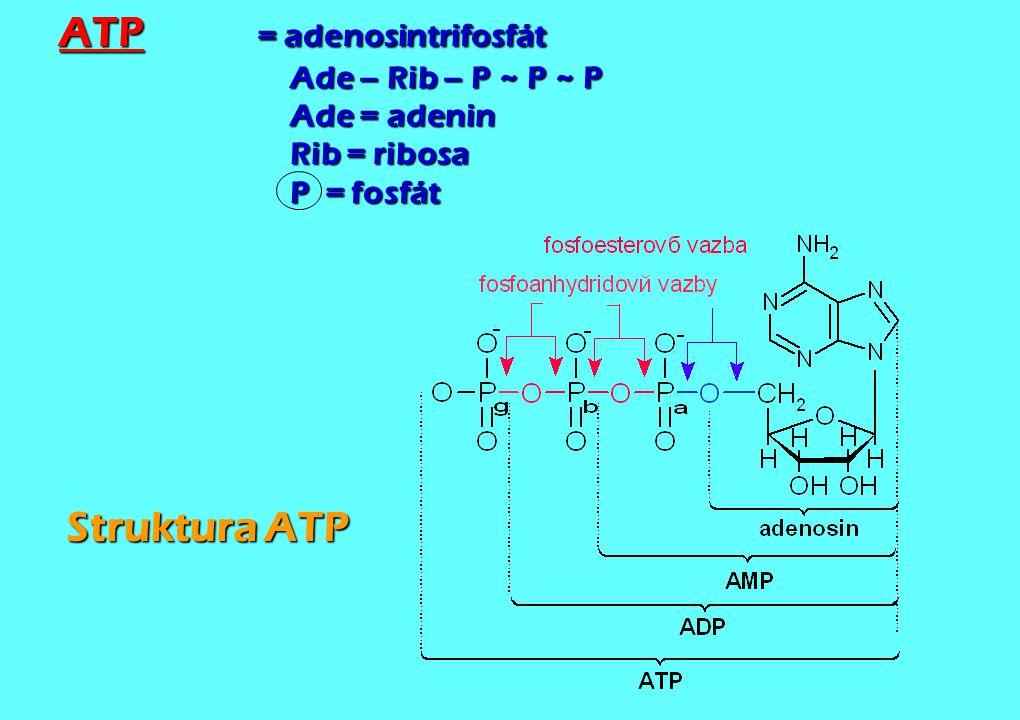 ATP. = adenosintrifosfát. Ade – Rib – P ~ P ~ P. Ade = adenin