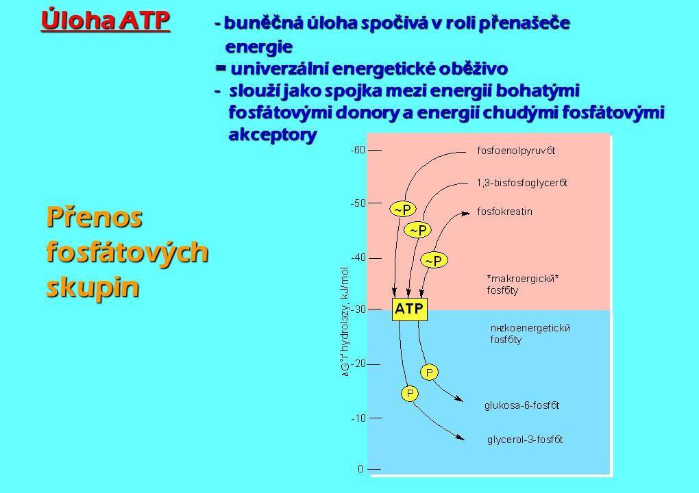 Přenos fosfátových skupin