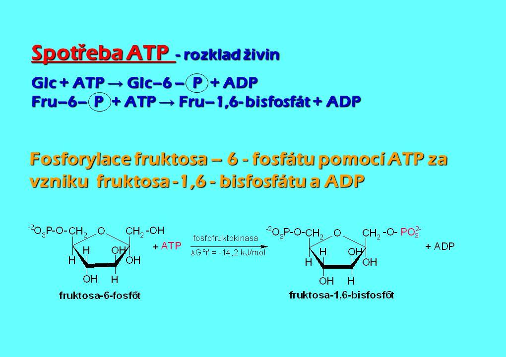 Spotřeba ATP. - rozklad živin
