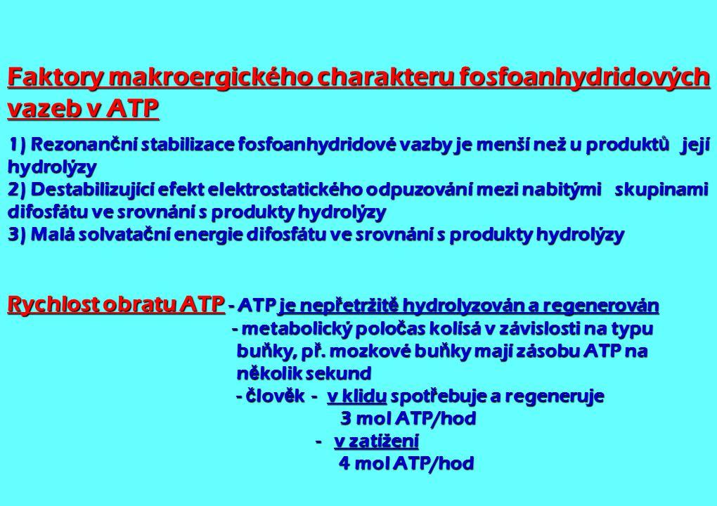 Faktory makroergického charakteru fosfoanhydridových vazeb v ATP
