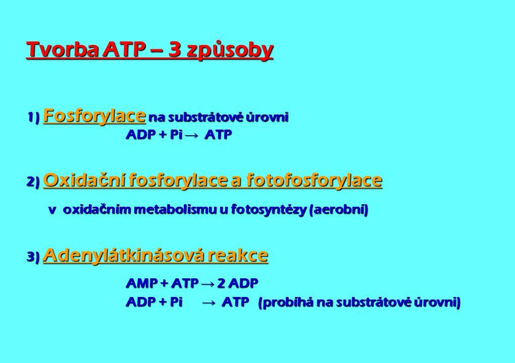 Tvorba ATP – 3 způsoby 1) Fosforylace na substrátové úrovni ADP + Pi → ATP. 2) Oxidační fosforylace a fotofosforylace.