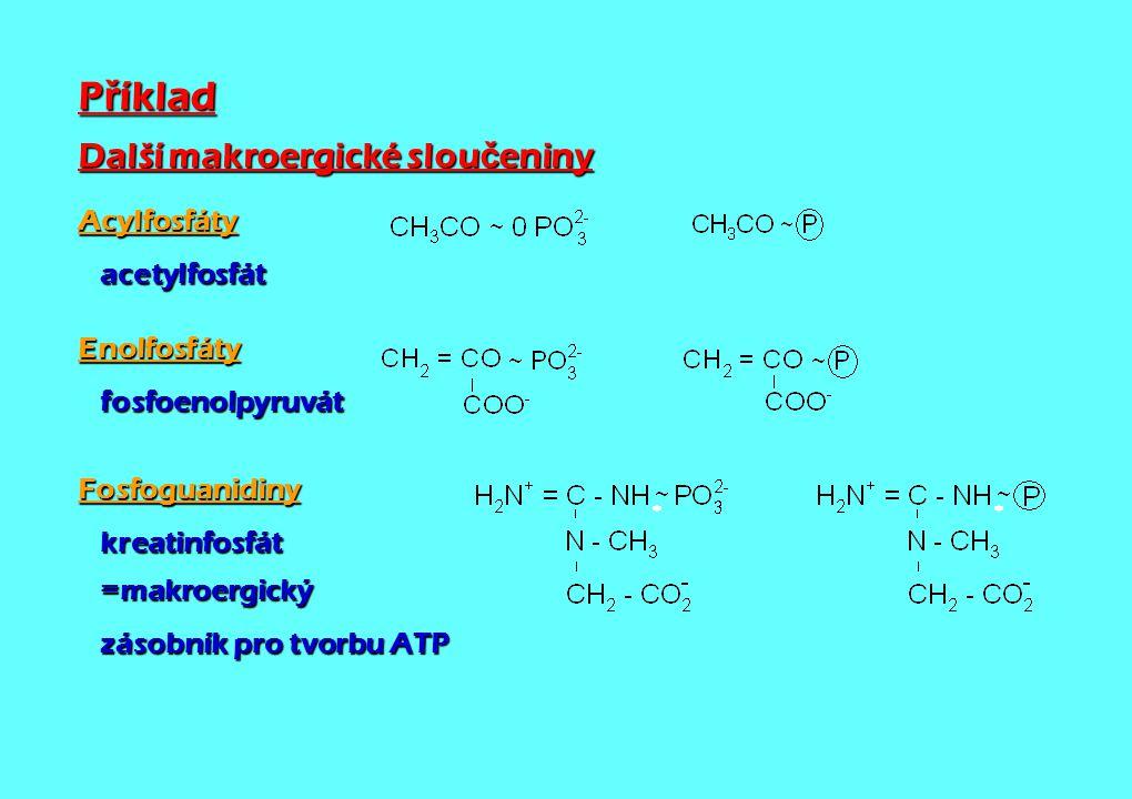 Příklad Další makroergické sloučeniny Acylfosfáty acetylfosfát