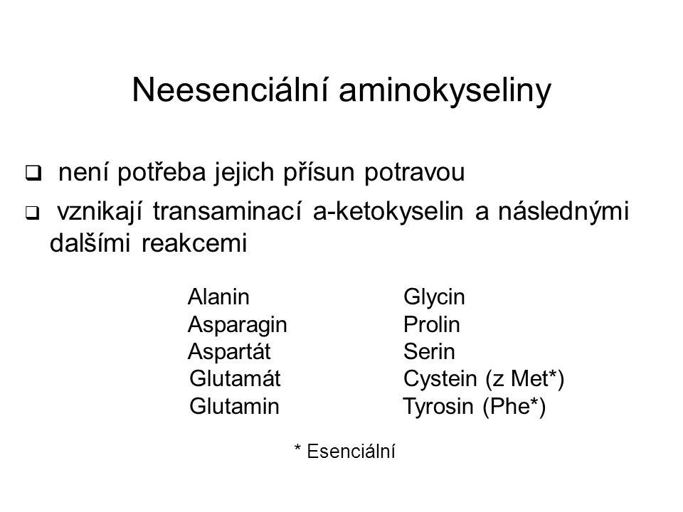 Neesenciální aminokyseliny