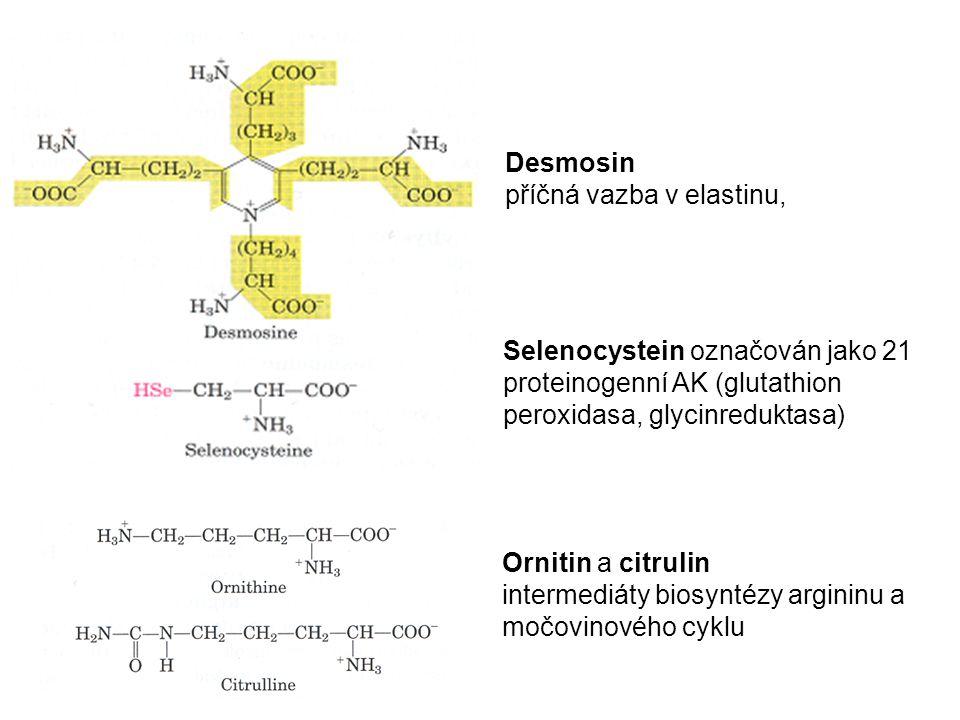 Desmosin příčná vazba v elastinu, Selenocystein označován jako 21 proteinogenní AK (glutathion peroxidasa, glycinreduktasa)