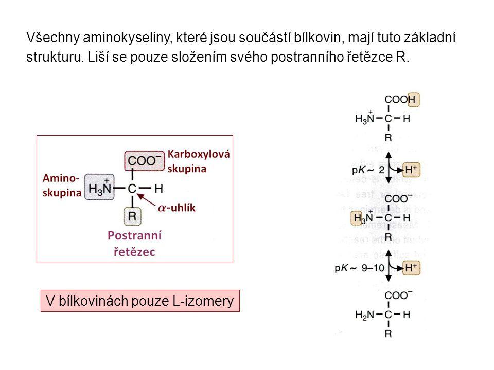 Všechny aminokyseliny, které jsou součástí bílkovin, mají tuto základní strukturu. Liší se pouze složením svého postranního řetězce R.