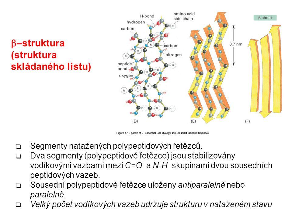 b–struktura (struktura skládaného listu)