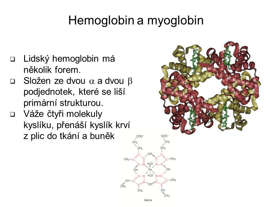 Hemoglobin a myoglobin