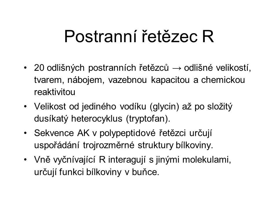 Postranní řetězec R 20 odlišných postranních řetězců → odlišné velikostí, tvarem, nábojem, vazebnou kapacitou a chemickou reaktivitou.