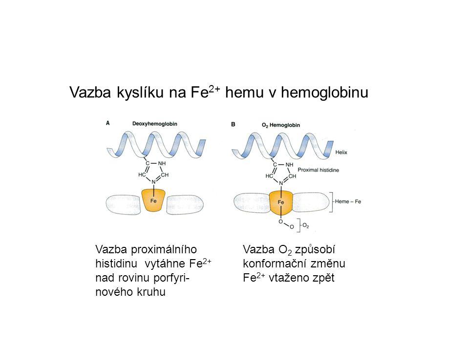 Vazba kyslíku na Fe2+ hemu v hemoglobinu