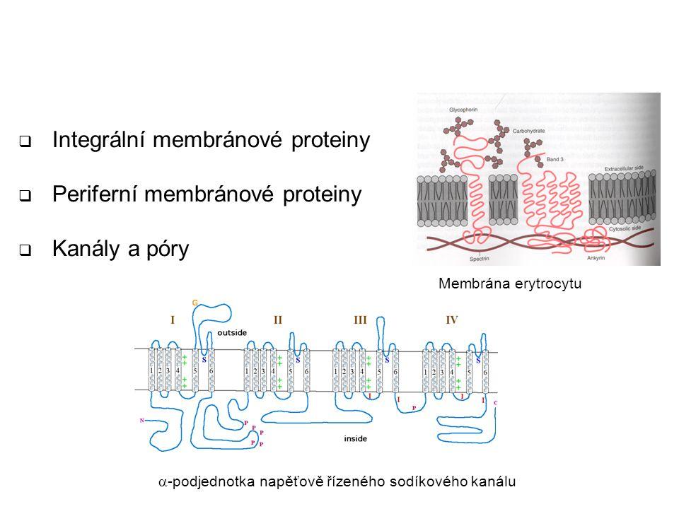 Proteiny biologických membrán