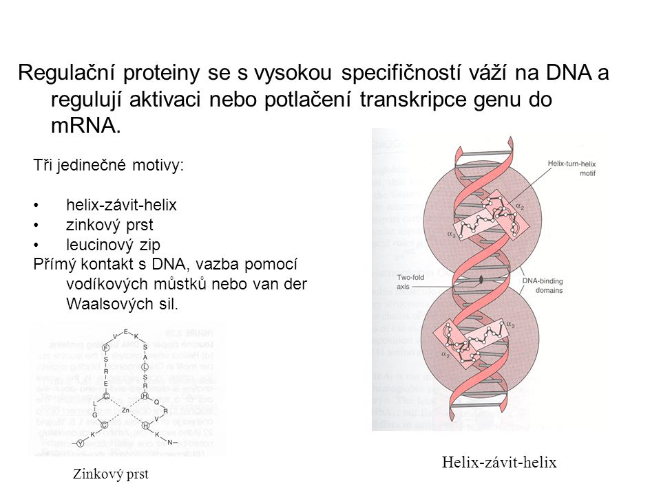 Proteiny regulace transkripce DNA