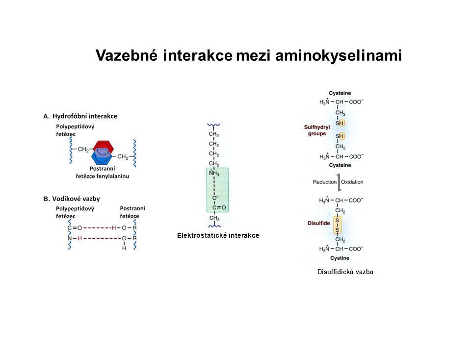 Vazebné interakce mezi aminokyselinami