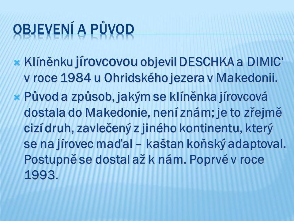 Objevení a původ Klíněnku jírovcovou objevil DESCHKA a DIMIC' v roce 1984 u Ohridského jezera v Makedonii.