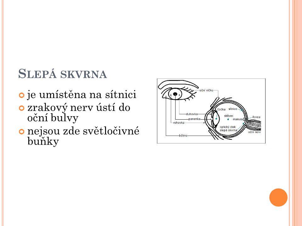 Slepá skvrna je umístěna na sítnici zrakový nerv ústí do oční bulvy