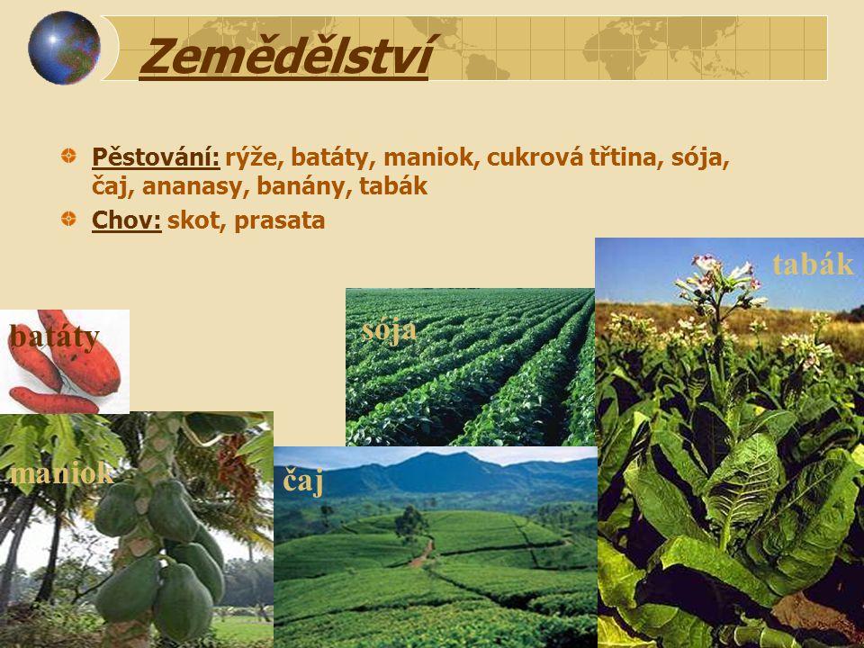 Zemědělství tabák sója batáty maniok čaj