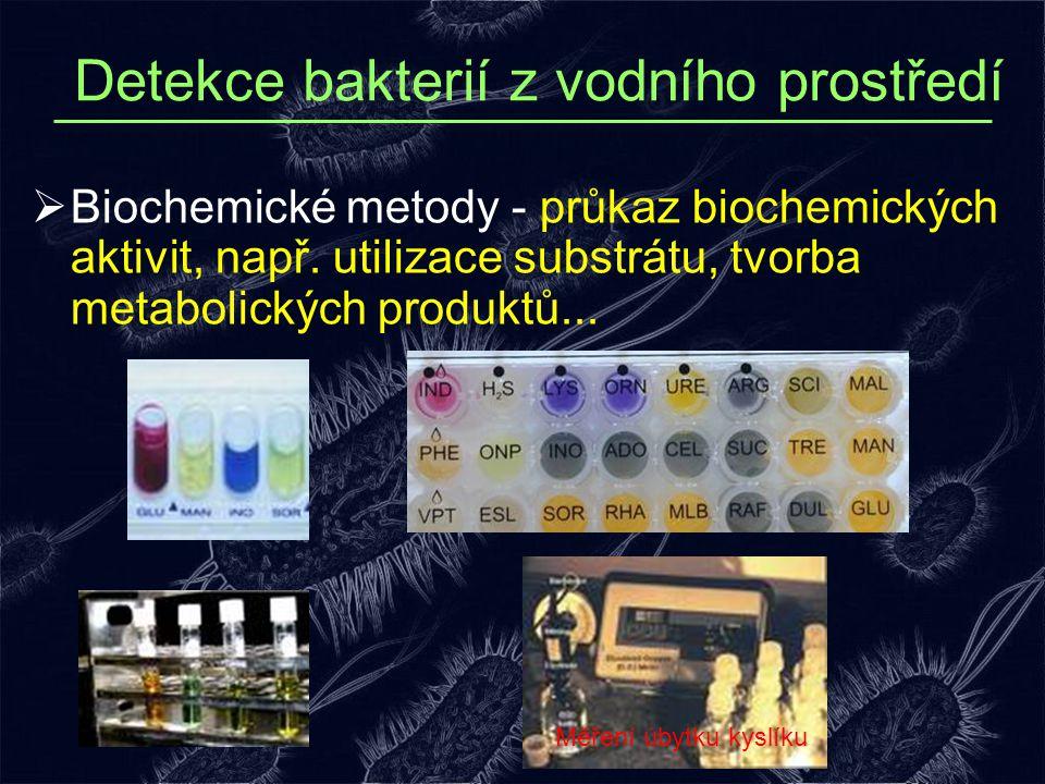 Detekce bakterií z vodního prostředí