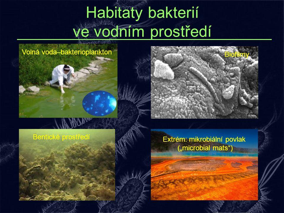 Habitaty bakterií ve vodním prostředí