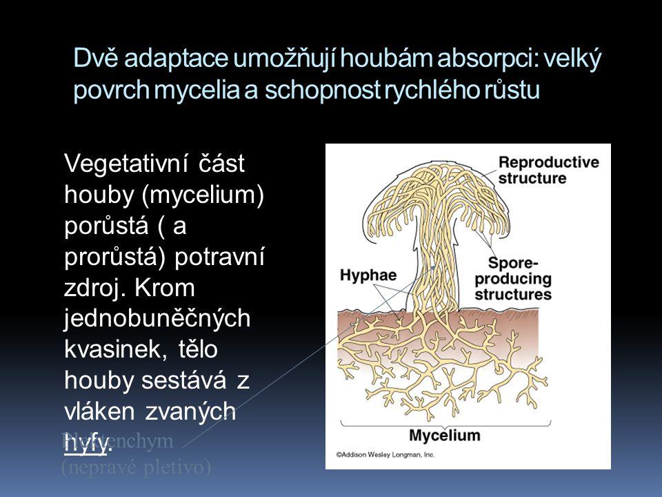 Dvě adaptace umožňují houbám absorpci: velký povrch mycelia a schopnost rychlého růstu